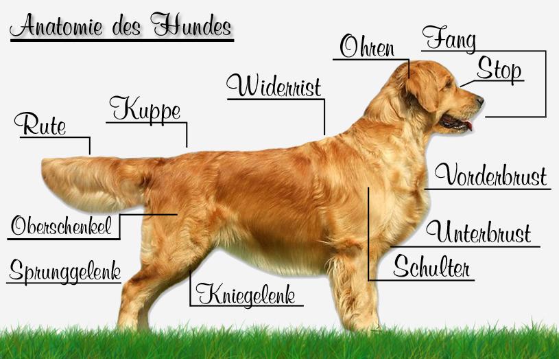 Hunde Informationen